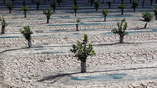 La sequía amenaza el suministro en algunas localidades y lleva pérdidas millonarias al campo