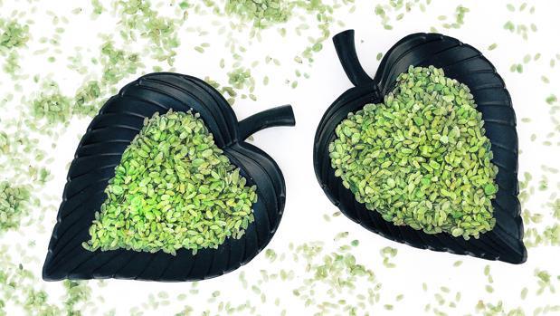 Granos de arroz verde