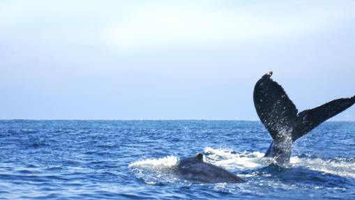 En esta zona es frecuente avistar todo tipo de cetáceos