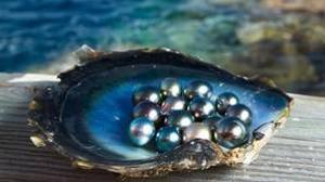 La perla, la reina de las gemas