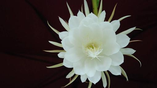 Las Flores Más Caras Del Mundo