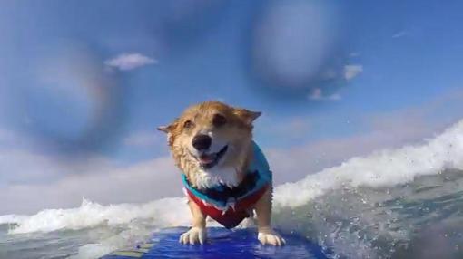 Tu perro también hará surf
