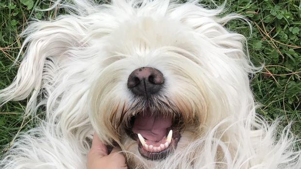 Los cinco mejores gadgets para perros