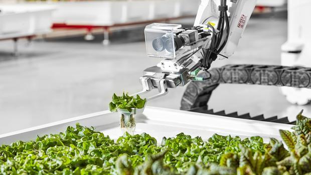 Ya están aquí las primeras lechugas cultivadas por robots granjeros