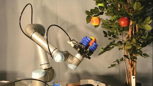 Llegan los robots agricultores: recogen la fruta directamente del árbol como un granjero humano