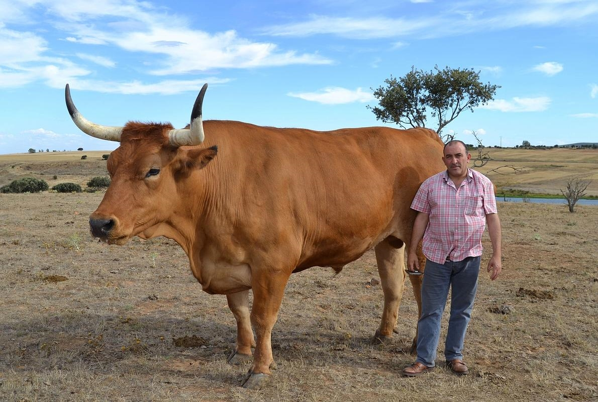 La mejor carne del mundo está en un pueblo de León