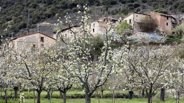 Dónde Y Cuándo Ver Los Cerezos En Flor En El Valle Del Jerte