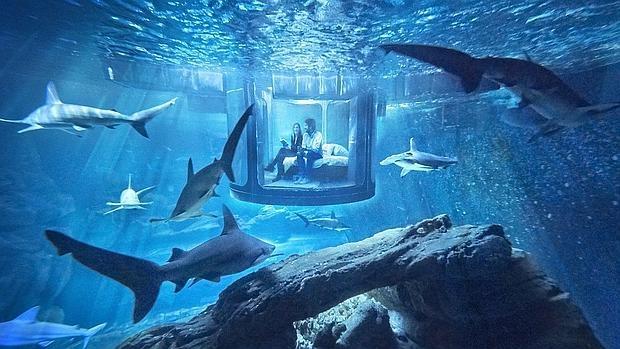 Habitación instalada en el tanque de agua de los tiburones del acuario de París