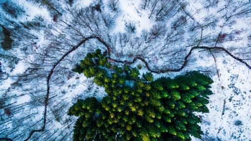 Kalbyris forest