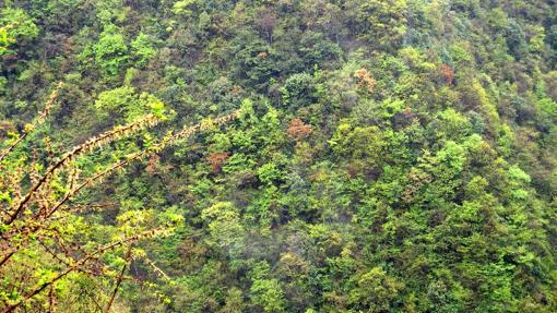 Vista aérea de la vegetación