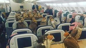 Qué hacen 80 halcones en una cabina de un avión comercial