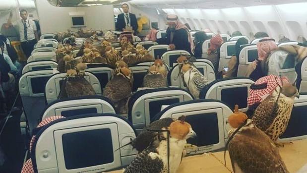 La cabina del avión, ocupada por los halcones