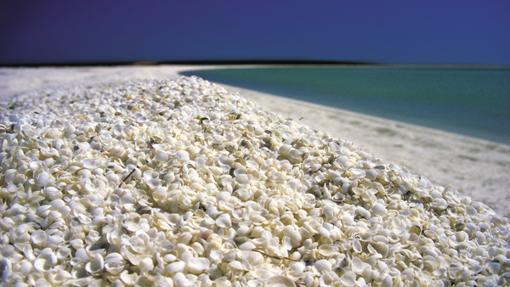 Shell Beach, en Australia