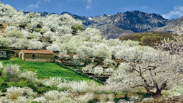 Valle del jerte d nde y cu ndo ver los cerezos en flor en for Oficina de turismo valle del jerte