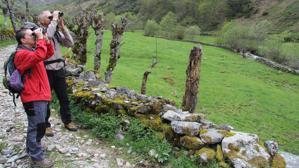 Cinco tesoros del paraíso natural de Asturias