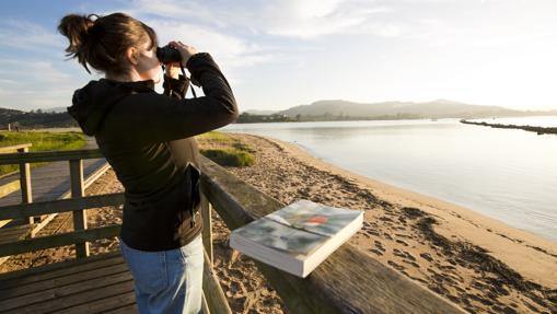 Observación de aves en la Ría de Villaviciosa
