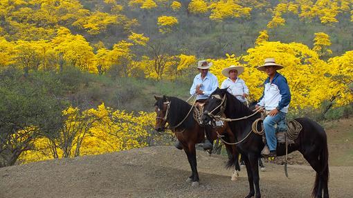 Reserva de Biosfera Transfronteriza de Bosques de Paz (Ecuador y Perú)