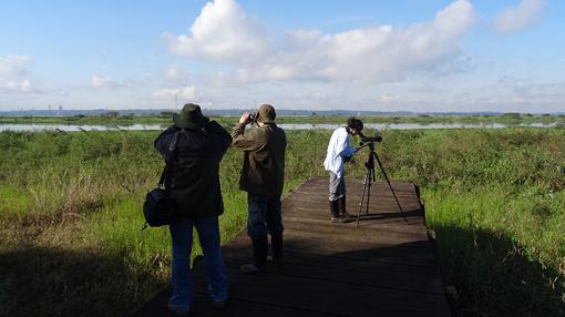 Censo de aves acuáticas – Área de embalse - Reserva de Biosfera de Itaipú (Paraguay)