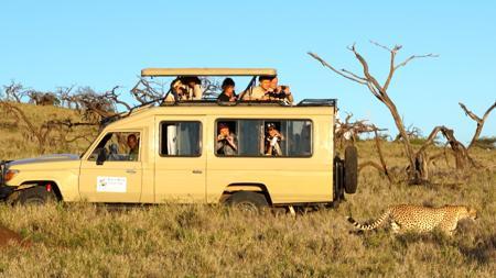 Observando guepardos en la Reserva de Lewa