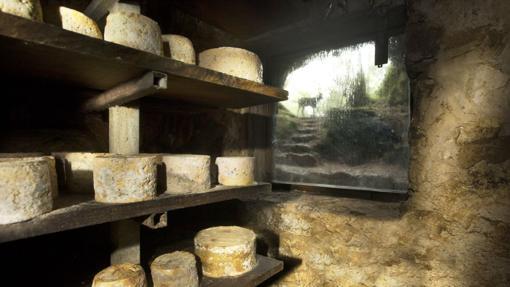 Qesos de Cabrales, uno de los quesos azules más reconocidos del mundo