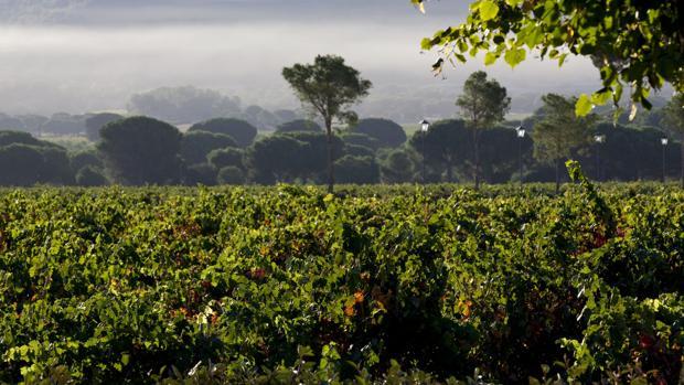 The New York Times señala a la Ribera del Duero como uno de los 52 destinos turísticos de 2018. En Castilla y León hay seis rutas certificadas del vino