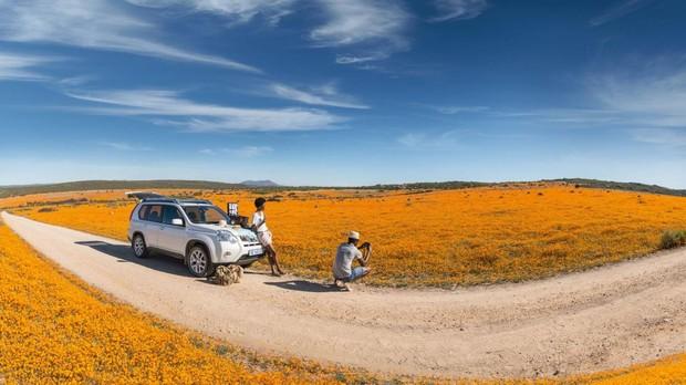 Una alfombra de flores en el desierto de Kalahari, Sudáfrica