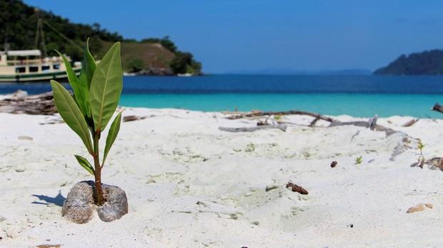 Las aguas cristalinas, la arena blanca coralina y una frondosa vegetación son una constante en centenares de playas a lo largo de las cerca de 800 islas del archipiélago Mergui, en el sur de Birmania